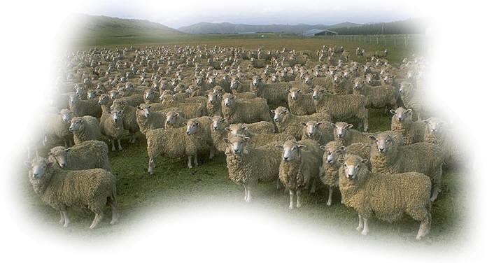 sheeppix.jpg