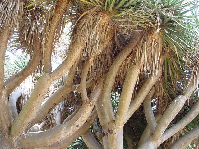 treefingers.jpg